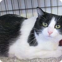 Adopt A Pet :: BellaDonna - Reeds Spring, MO
