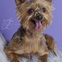 Adopt A Pet :: Tiny - Baton Rouge, LA