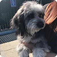 Adopt A Pet :: Tally - Thousand Oaks, CA