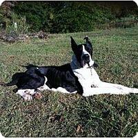 Adopt A Pet :: Dalton - Oak Ridge, TN