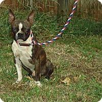 Adopt A Pet :: Austin - Spring Valley, NY
