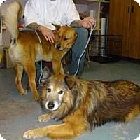 Adopt A Pet :: O'Neil - Antioch, IL