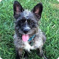 Adopt A Pet :: Lizzy - Knoxville, TN