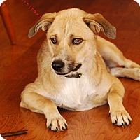 Adopt A Pet :: Turq - Garland, TX