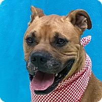 Adopt A Pet :: Caine - Evansville, IN