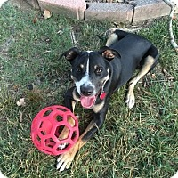 Adopt A Pet :: Foster - Acworth, GA