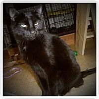 Adopt A Pet :: KINGSLEY - Medford, WI