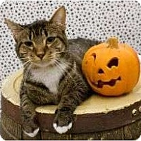 Adopt A Pet :: Indy - Warren, MI