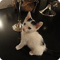 Adopt A Pet :: Reese - Phoenix, AZ