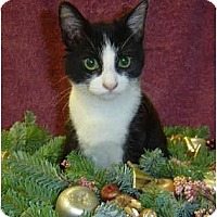 Adopt A Pet :: Stripe - Modesto, CA