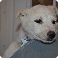 Adopt A Pet :: Baxter - Westminster, CO