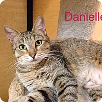 Adopt A Pet :: Danielle - Foothill Ranch, CA