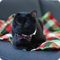 Adopt A Pet :: Troy - St. Louis, MO