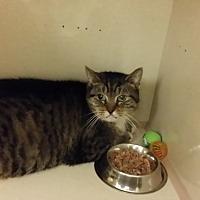 Adopt A Pet :: Mama - Westbury, NY