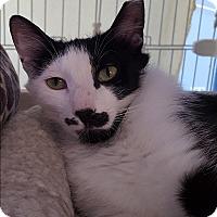 Adopt A Pet :: Frenchy - Raritan, NJ