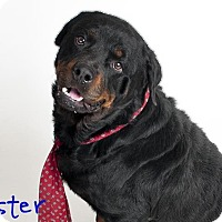 Adopt A Pet :: Mister - Tracy, CA
