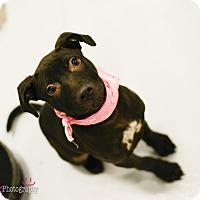Adopt A Pet :: Zoey - Muldrow, OK