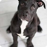 Adopt A Pet :: Homer - Houston, TX