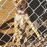 Adopt A Pet :: Willie - Crosbyton, TX