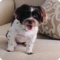 Adopt A Pet :: Jenna (Jennie) - Houston, TX