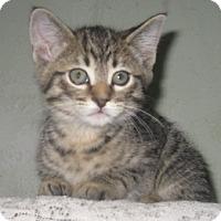 Adopt A Pet :: Copper - Dallas, TX