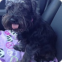 Adopt A Pet :: Charlie - Oceanside, CA