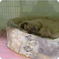 Adopt A Pet :: Angel - Winter Haven, FL