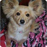Adopt A Pet :: Bunni - Oceanside, CA