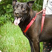 Adopt A Pet :: Taser - Fort Valley, GA