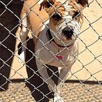 Adopt A Pet :: Kaia - Fowler, CA