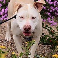 Adopt A Pet :: April - Las Vegas, NV