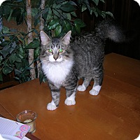Adopt A Pet :: Kaboodle - Union, SC