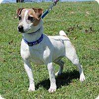 Adopt A Pet :: Elliott from Dallas - Dallas/Ft. Worth, TX