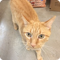 Adopt A Pet :: Bradley - Byron Center, MI