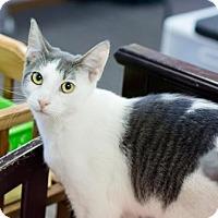 Adopt A Pet :: Boomarang - Fountain Hills, AZ