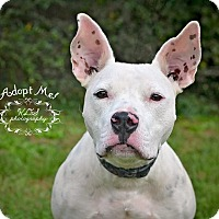 Adopt A Pet :: Graham - Fort Valley, GA