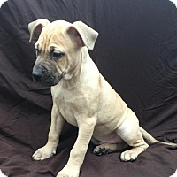 Adopt A Pet :: Gus - East Sparta, OH