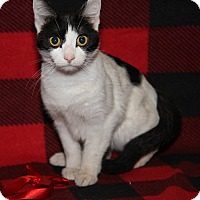 Adopt A Pet :: Polly (Spayed) - Marietta, OH
