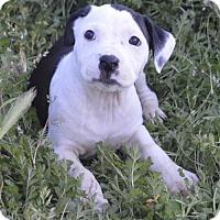Adopt A Pet :: Crayon: Violet - Corona, CA