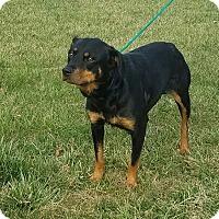 Adopt A Pet :: Bria - Cameron, MO