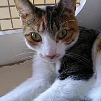 Adopt A Pet :: FeFe - San Ramon, CA