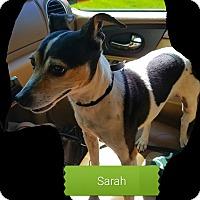 Adopt A Pet :: Sarah - Indianapolis, IN