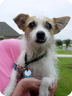Terrier (Unknown Type, Small) Mix Dog for adoption in Baton Rouge, Louisiana - Eva