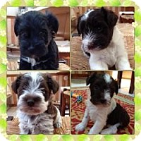 Adopt A Pet :: Trixie & her brothers - North Benton, OH