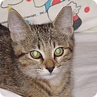 Adopt A Pet :: Mary's Kittens - Scottsdale, AZ