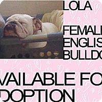 Adopt A Pet :: LOLA - Hollywood, FL