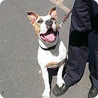 Adopt A Pet :: Levi - Berlin, CT