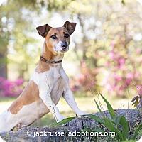 Adopt A Pet :: Duffy - Conyers, GA