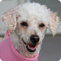 Adopt A Pet :: Hailey - La Costa, CA