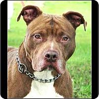 Adopt A Pet :: Titan - Knoxville, TN